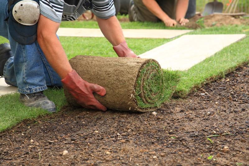 Как посадить газонную траву на даче своими руками 65