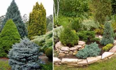 Специфика использования хвойных растений в ландшафтном дизайне