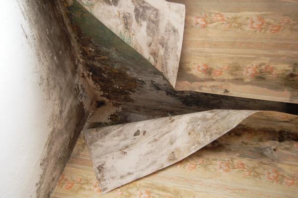 Удаление плесени с мебели в домашних условиях
